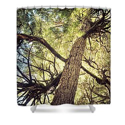 Reaching For Sun Shower Curtain