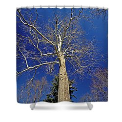 Shower Curtain featuring the photograph Reaching For The Sky by Suzanne Stout