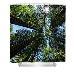 Reaching For The Sun Shower Curtain