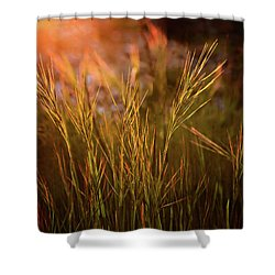 Shower Curtain featuring the photograph Reaching For The Sunset Dark by Mary Jo Allen