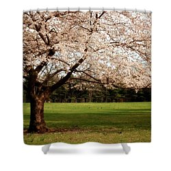Reaching Out - Ocean County Park Shower Curtain by Angie Tirado
