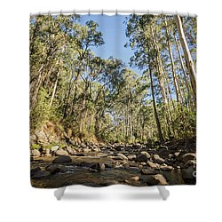 Shower Curtain featuring the photograph Reaching Skyward by Linda Lees