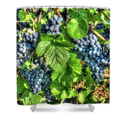 Ready For Harvest Shower Curtain by Alan Toepfer