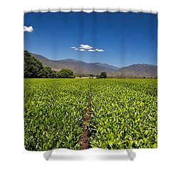 Ready For Harvest Shower Curtain by Mark Lucey
