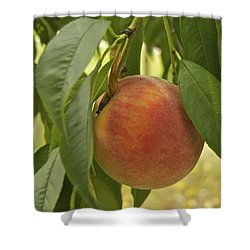Ready For Picking 2904 Shower Curtain by Michael Peychich