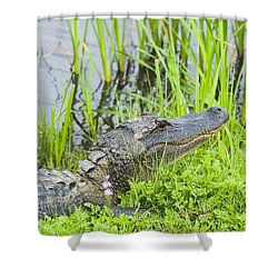 Ready Shower Curtain
