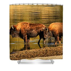 Shower Curtain featuring the photograph Ready To Cross The Yellowstone by Adam Jewell