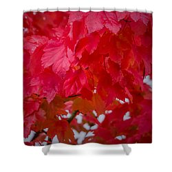 Ready To Fall Shower Curtain