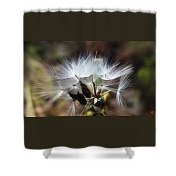Ready To Fly... Salsify Seeds Shower Curtain