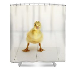 Ready To Rumble - Square Version Shower Curtain by Amy Tyler