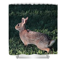 Ready To Run Shower Curtain