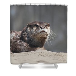 Really Cute Face Of A Giant River Otter Shower Curtain