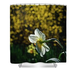 Rear View Daffodil Shower Curtain