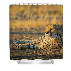 Reclining Cheetah Shower Curtain by Inge Johnsson