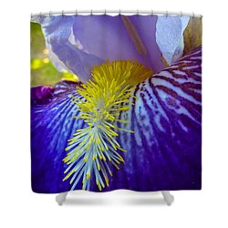 Recollection Spring 1 Shower Curtain by Jean Bernard Roussilhe