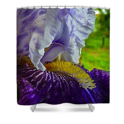 Recollection Spring 4 Shower Curtain