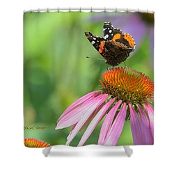 Red Admiral On Cone Flower Shower Curtain