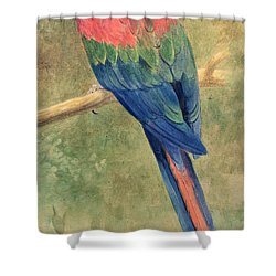 Red And Blue Macaw Shower Curtain by Henry Stacey Marks