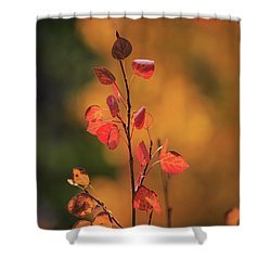 Shower Curtain featuring the photograph Red And Gold by David Chandler