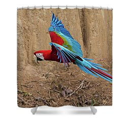 Red-and-green Macaw Shower Curtain