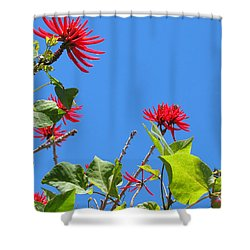 Red And Green San Diego Flowers Shower Curtain by Doreen Whitelock