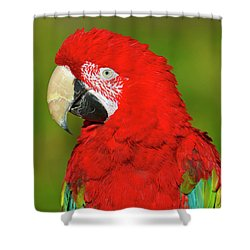 Shower Curtain featuring the photograph Red And Green by Tony Beck