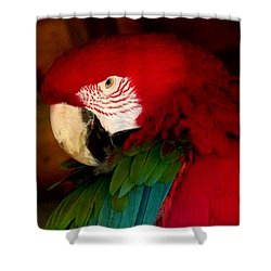 Red And Green Wing Macaw Shower Curtain