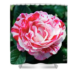 Red And Pink Floral Candy Rose Garden 490 Shower Curtain