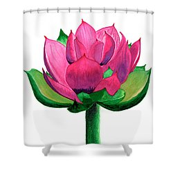 Red And Pink Lotus Floral Watercolor Painting 619 Shower Curtain