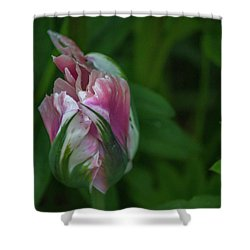 Red And White Bud 1 Shower Curtain by Timothy Latta