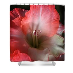 Red And White Gladiolus Flower Shower Curtain by Joy Watson