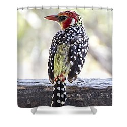 Red-and-yellow Barbet Shower Curtain by Pravine Chester