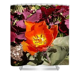 Red And Yellow Flower Shower Curtain by Tim Allen