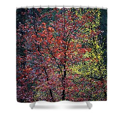 Red And Yellow Leaves Abstract Vertical Number 1 Shower Curtain by Heather Kirk