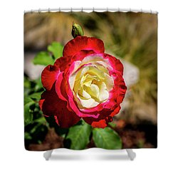 Red And Yellow Rose Shower Curtain