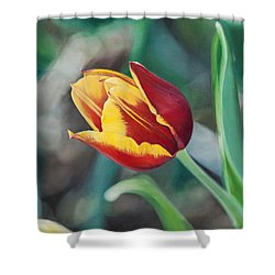 Red And Yellow Tulip Shower Curtain by Joshua Martin