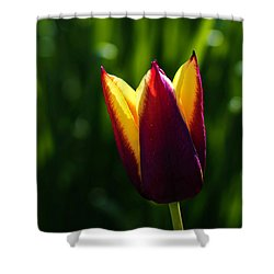 Red And Yellow Tulip Shower Curtain