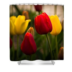 Shower Curtain featuring the photograph Red And Yellow Tulips by Jay Stockhaus