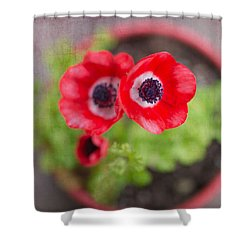 Red Anemones In Pot Shower Curtain
