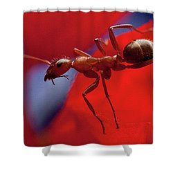 Shower Curtain featuring the photograph Red Ant Macro by Jeff Folger