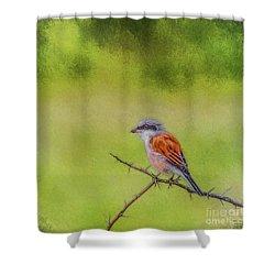Red-backed Shrike Shower Curtain