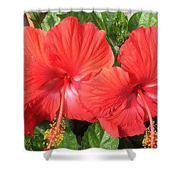Red Beauties Shower Curtain