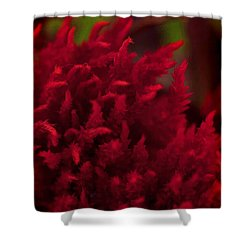 Red Beauty Shower Curtain by Cherie Duran