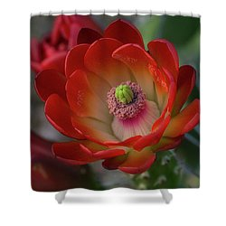 Shower Curtain featuring the photograph Red Beauty  by Saija Lehtonen