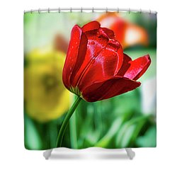 Red Beauty Shower Curtain