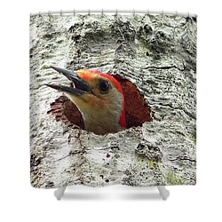 Red-bellied Woodpecker 02 Shower Curtain by Al Powell Photography USA