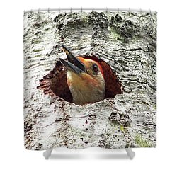 Red-bellied Woodpecker 03 Shower Curtain by Al Powell Photography USA