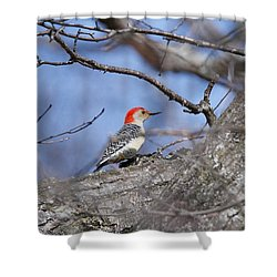 Shower Curtain featuring the photograph Red-bellied Woodpecker 1134 by Michael Peychich
