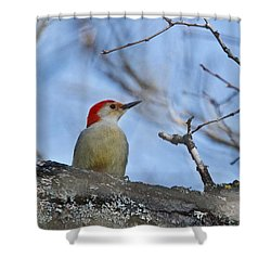 Shower Curtain featuring the photograph Red-bellied Woodpecker 1137 by Michael Peychich