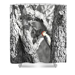 Shower Curtain featuring the photograph Red-bellied Woodpecker by Benanne Stiens